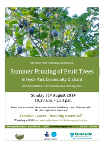 Summer pruning poster_final