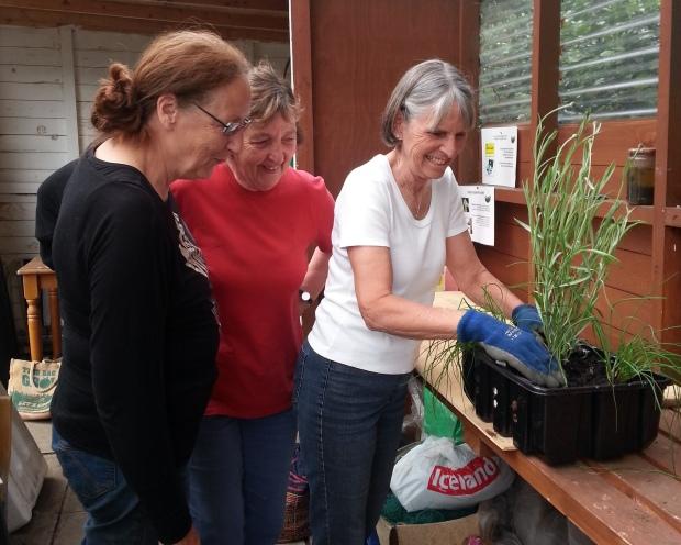 containerplantingfor tatton_crop